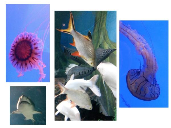 Karl arbeitet, Silvia geht bei Regenwetter ins Aquarium
