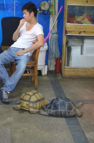 Schildkröten als Bürotiere